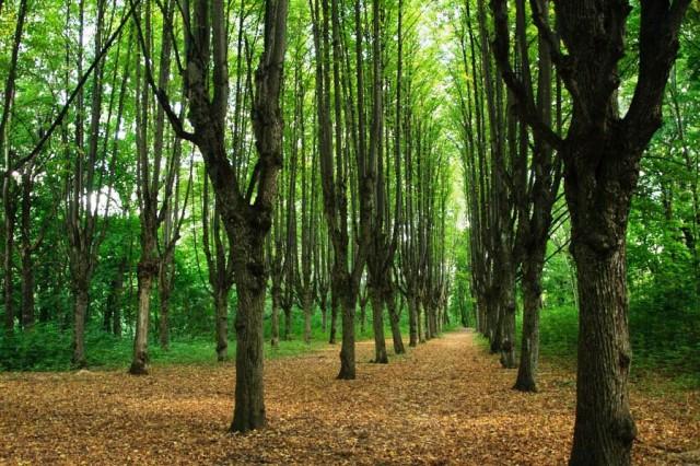 Шарівський парк