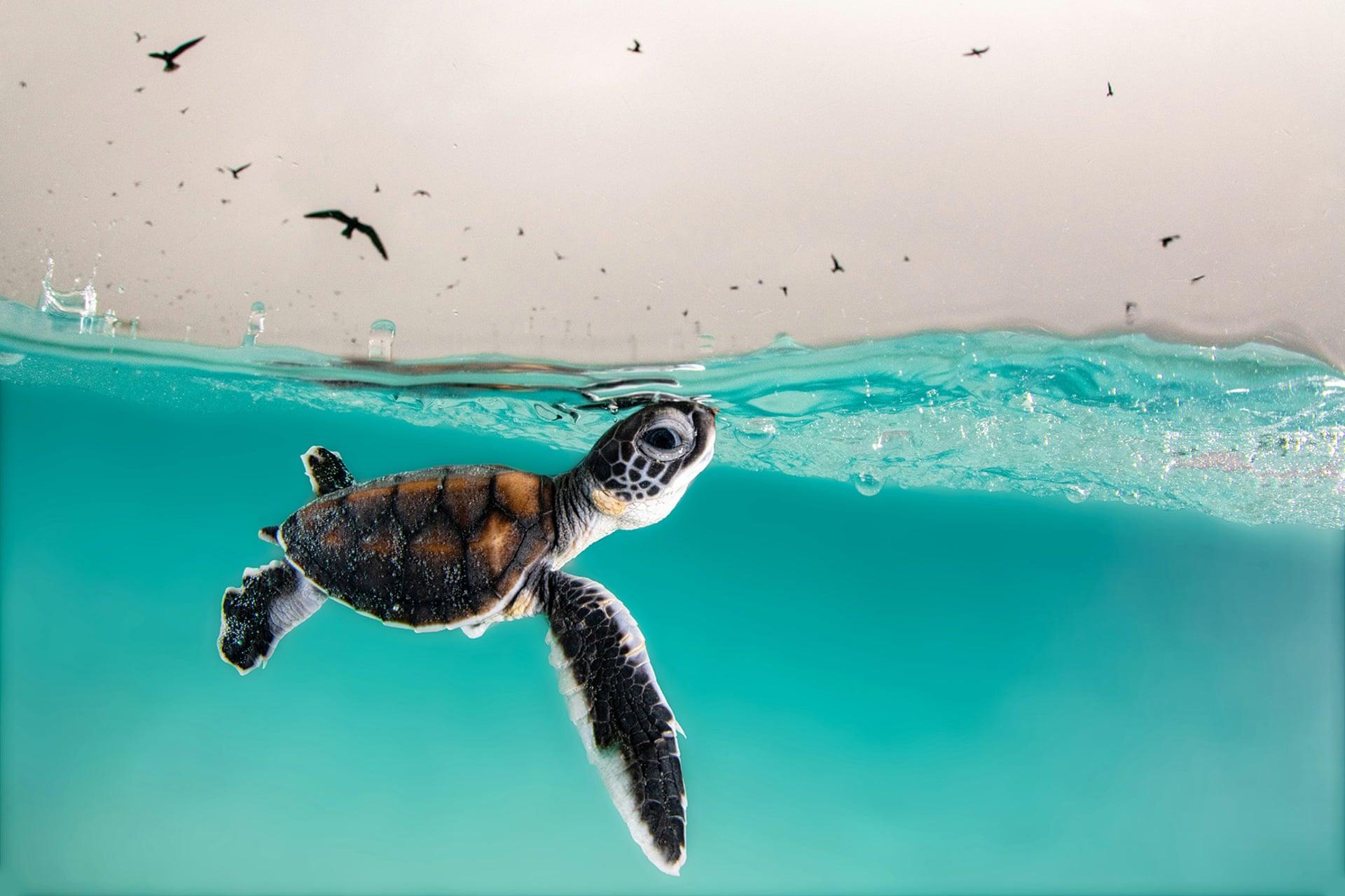 Маленькая зеленая морская черепаха