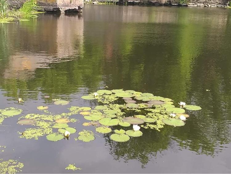 Вода перетворилася на клей: як громада на Хмельниччині врятувала річку